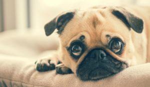 como acalmar seu cachorro que tem medo de barulhos