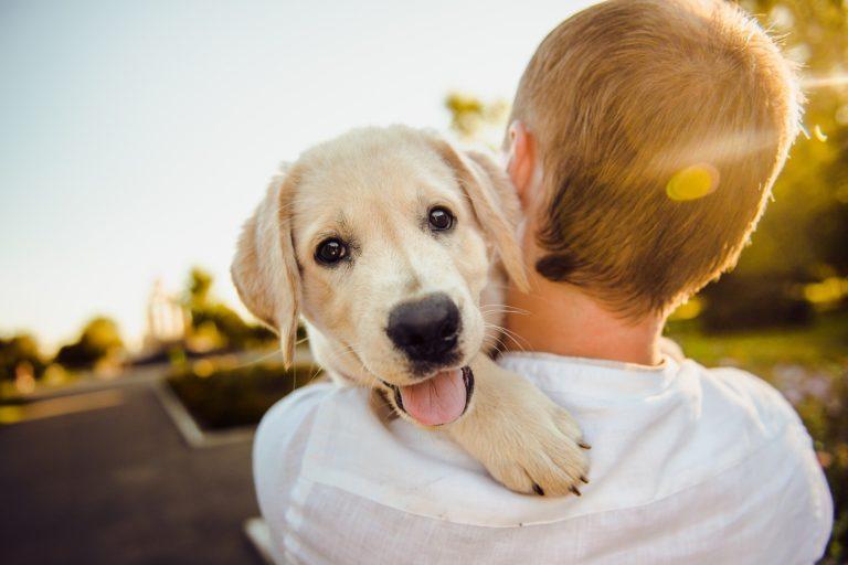 Hábitos para seu cão viver mais e feliz