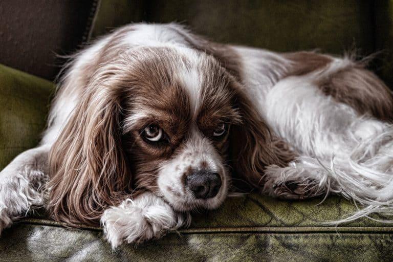 5 erros comuns na hora de repreender um cachorro